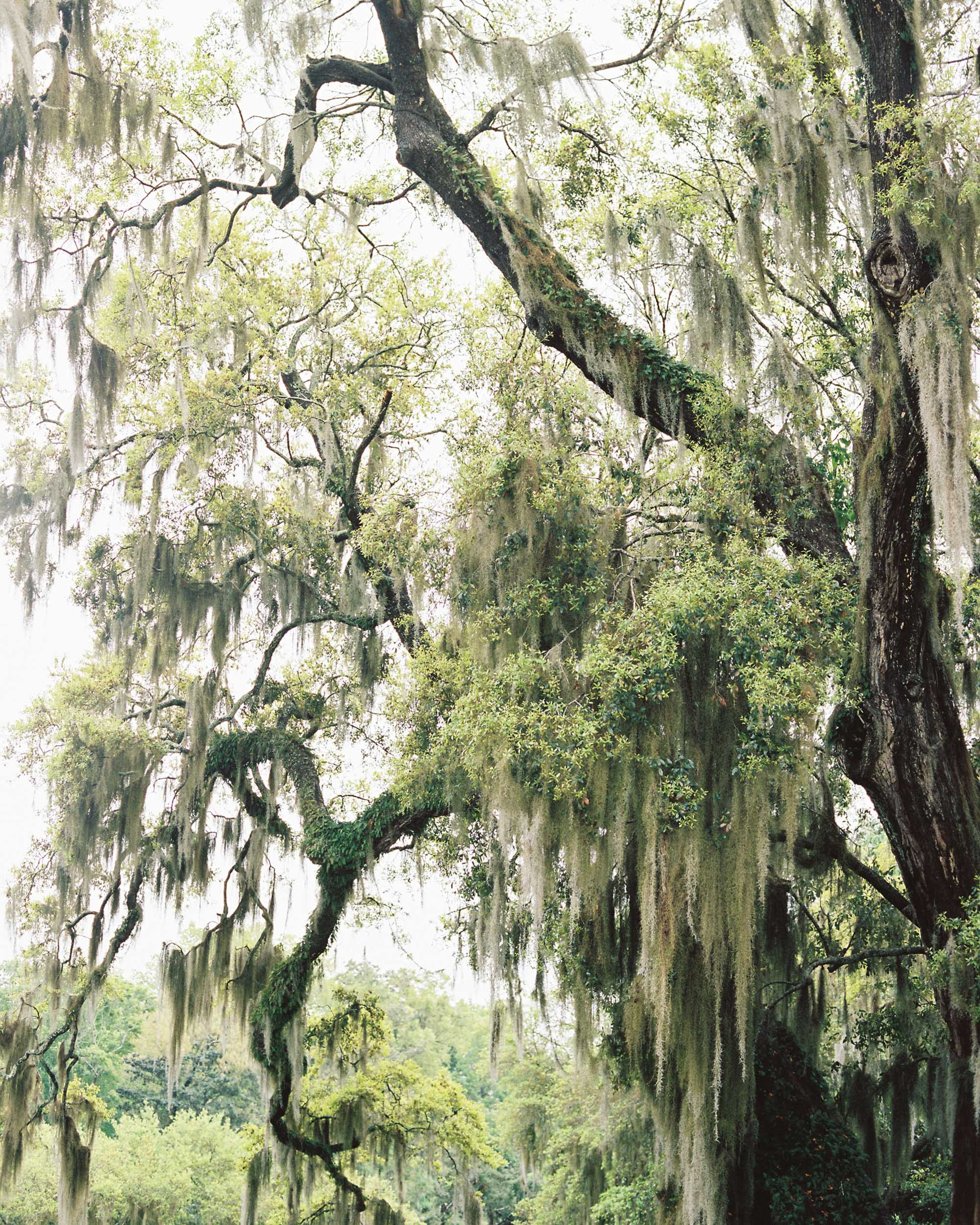 Middleton Place Charleston Wedding Photographer 29 - Middleton Place